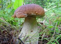 какие съедобные грибы бывают фото