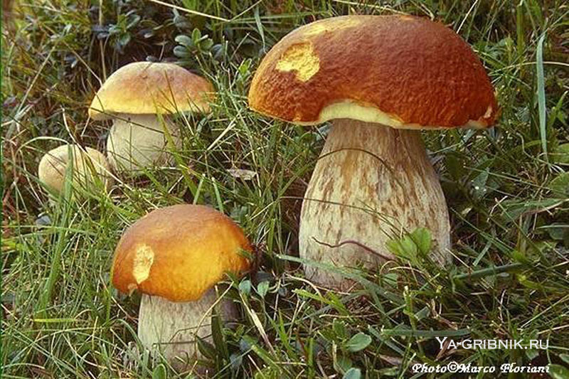 картинки грибы: